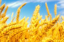Farmcrop